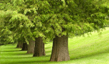 Tree Ordinances & Permits